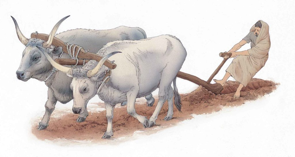 Romolo traccia il solco primigenio con toro e vacca-inklink-musei-simone-boni